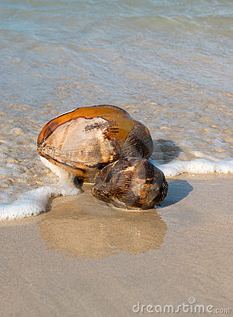 Two coconuts in the ocean waves