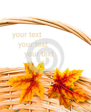 Two colorful autumn leaves on basket