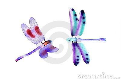 Two colorful dragonfly flying insects isolated