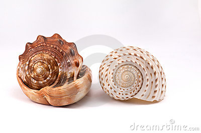 Two conch
