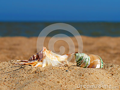 Two conch shells on a beach.