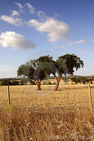 Two Cork Oaks