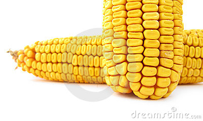 Two corn maize kernels