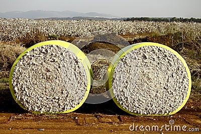 Two Cotton Blocks