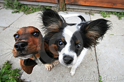 Two curious dogs