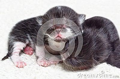 Two cute newborn kitten