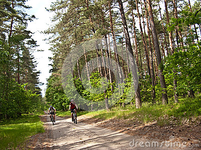 Two cyclists in green forest