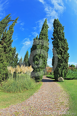 Two cypress separated path