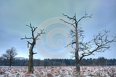 Two dead trees