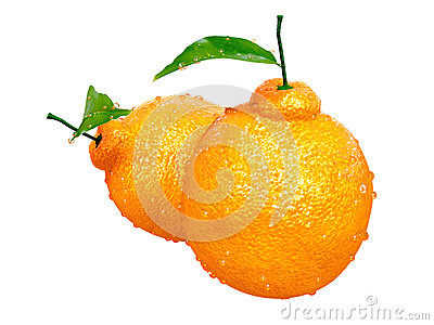 Two Dekopon oranges covered with Raindrops. Foods and Dishes Ser