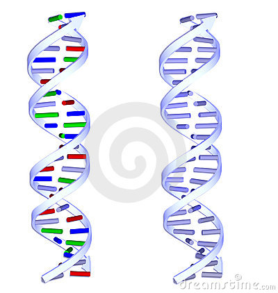 two DNA structures on white background