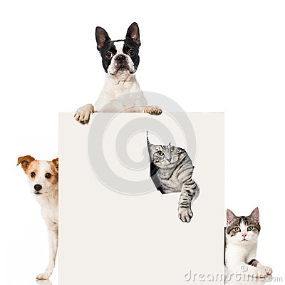 Free Two Dogs And Two Cats Royalty Free Stock Photos - 37420368