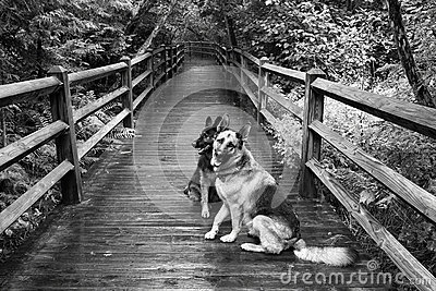 Two Dogs on Boardwalk at Tahquamenon Falls