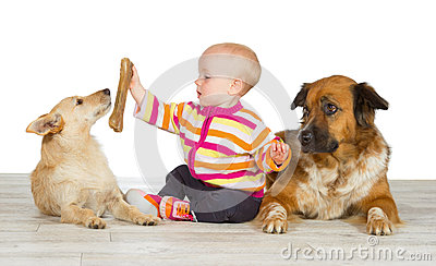 Two dogs flanking a cute baby
