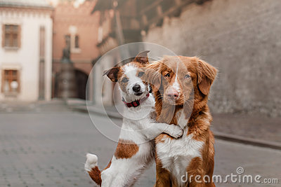 Two dogs in old town Stock Photo