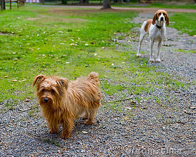 Two dogs outdoors