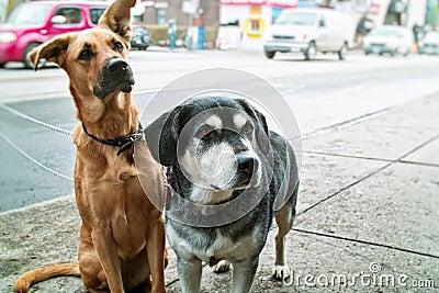Two dogs on sidewalk