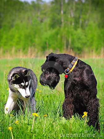 Two dogs sitting on grass