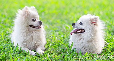 Two dogs staring to each other