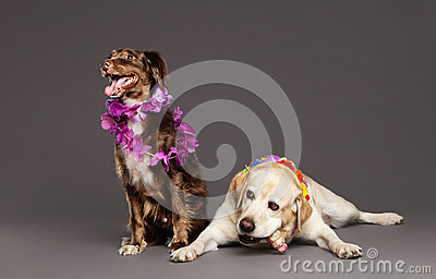 Two Dogs Studio Portrait