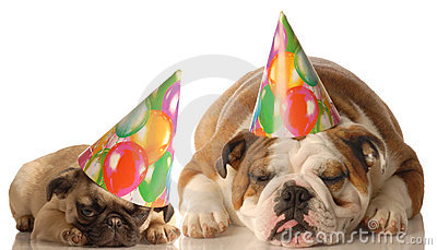 Two dogs wearing birthday hats