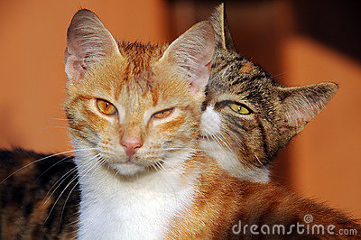 Two domestic house cats
