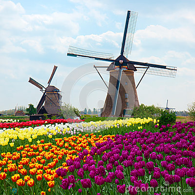 Free Two Dutch Windmills Over Tulips Field Stock Images - 37770764