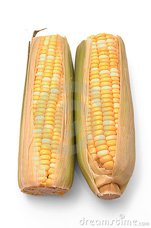 Two Ears of Corn Over White