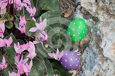 Two Easter eggs near a bunch of Cyclamens Stock Photo