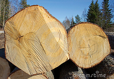 Two felled tree trunks