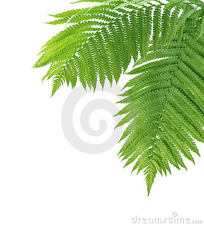 Free Two Ferns Royalty Free Stock Image - 5244386