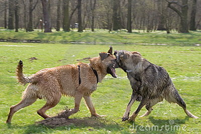 Two fighting dogs