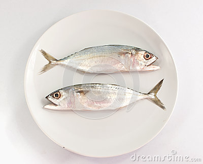 Two fish on white plate and white background