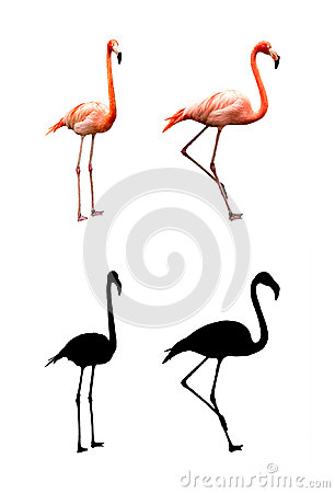 Free Two Flamingos Stock Images - 27744754