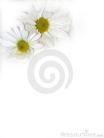 Free Two Flowers. Stock Photo - 439870