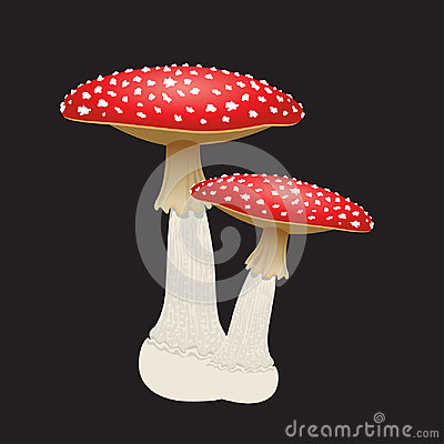 Free Two Fly Agaric Mushrooms Isolated On Black Background. Vector Illustration Royalty Free Stock Photography - 97594157