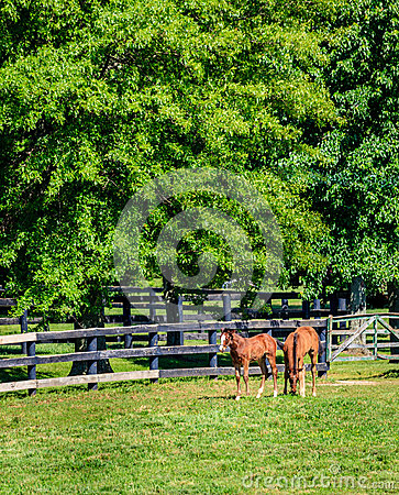 Two foals at a farm