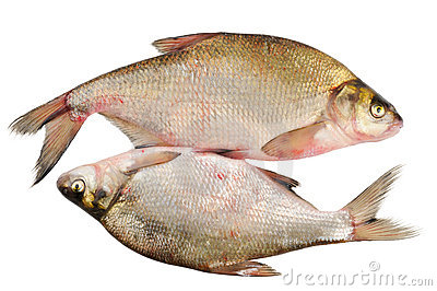 Two fresh freshwater fish