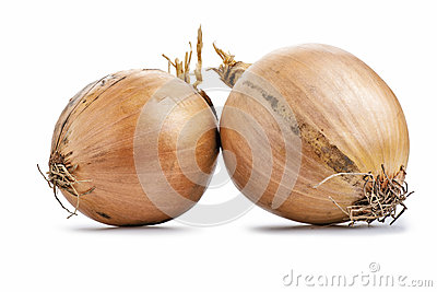 Two fresh golden onions