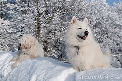 Two friends in deep snow
