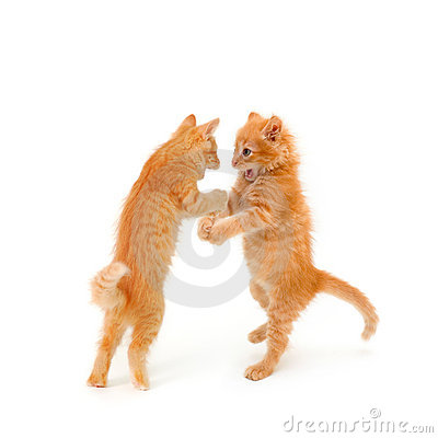 Two friends kittens dancing and speaking