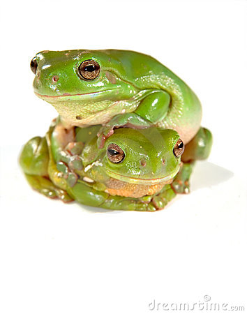 Free Two Frogs Stock Photo - 2242110