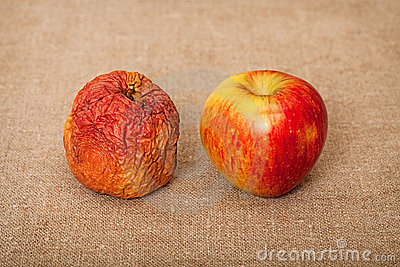 Two fruit against canvas - bad and good apples