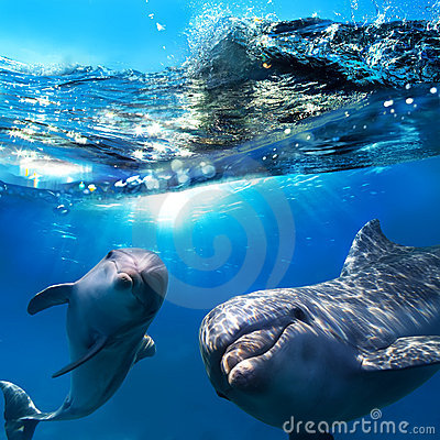 Free Two Funny Dolphins Smiling Underwater Stock Images - 22150734