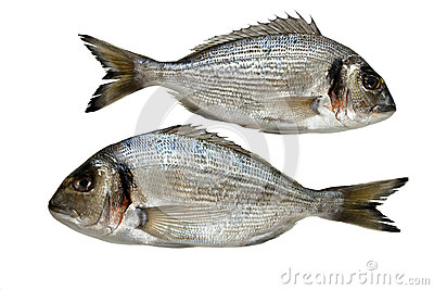 Two gilt head on white