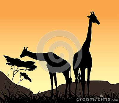 Two giraffes on a background of sunset