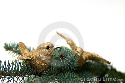 Two golden birds on fir branch