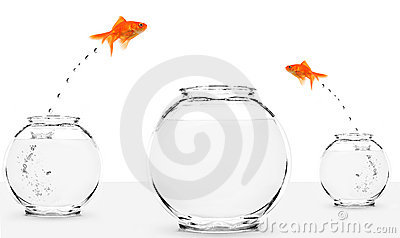 Two goldfish jumping to bigger fishbowl