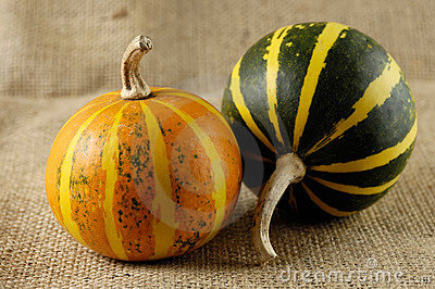 Two Gourds Still Life