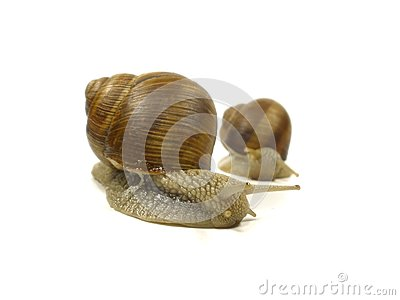 Two grape snail
